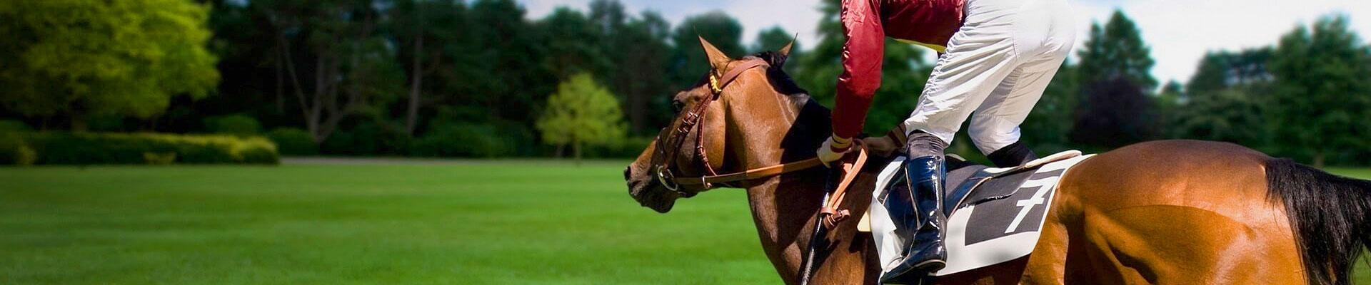 Odzież jeździecka